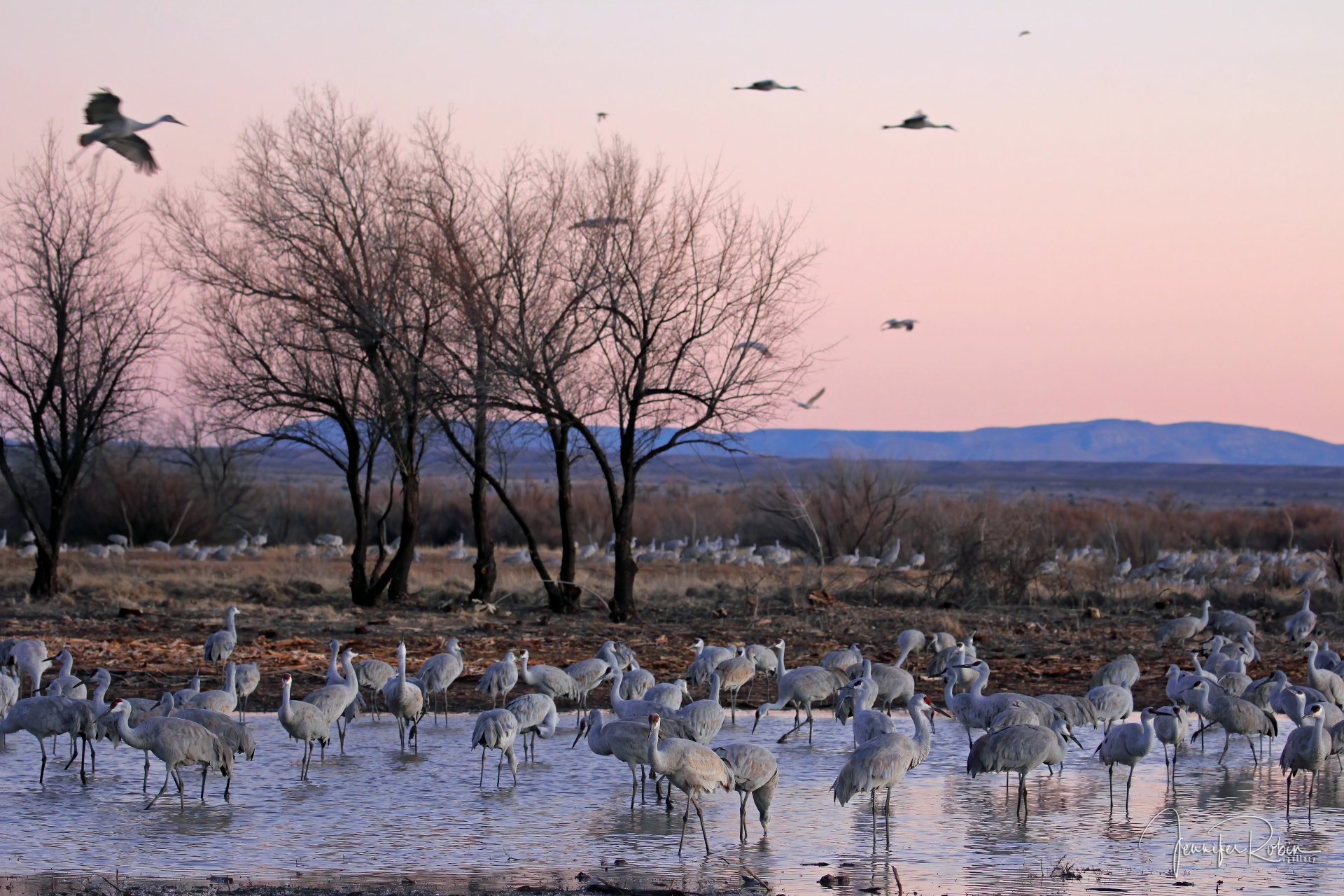 A mountain landscape of sandhill cranes at sunset. Ladd S Gordon Waterfowl Complex - Bernardo Wildlife Area