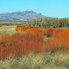 Orange brush give a stunning landscape at Bosque Del Apache