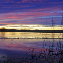 Sunrise landscape at flight deck pond, Bosque Del Apache