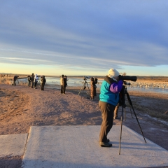 Photographers lined up to get images of Sandhill cranes at south pond, Bosque Del Apache