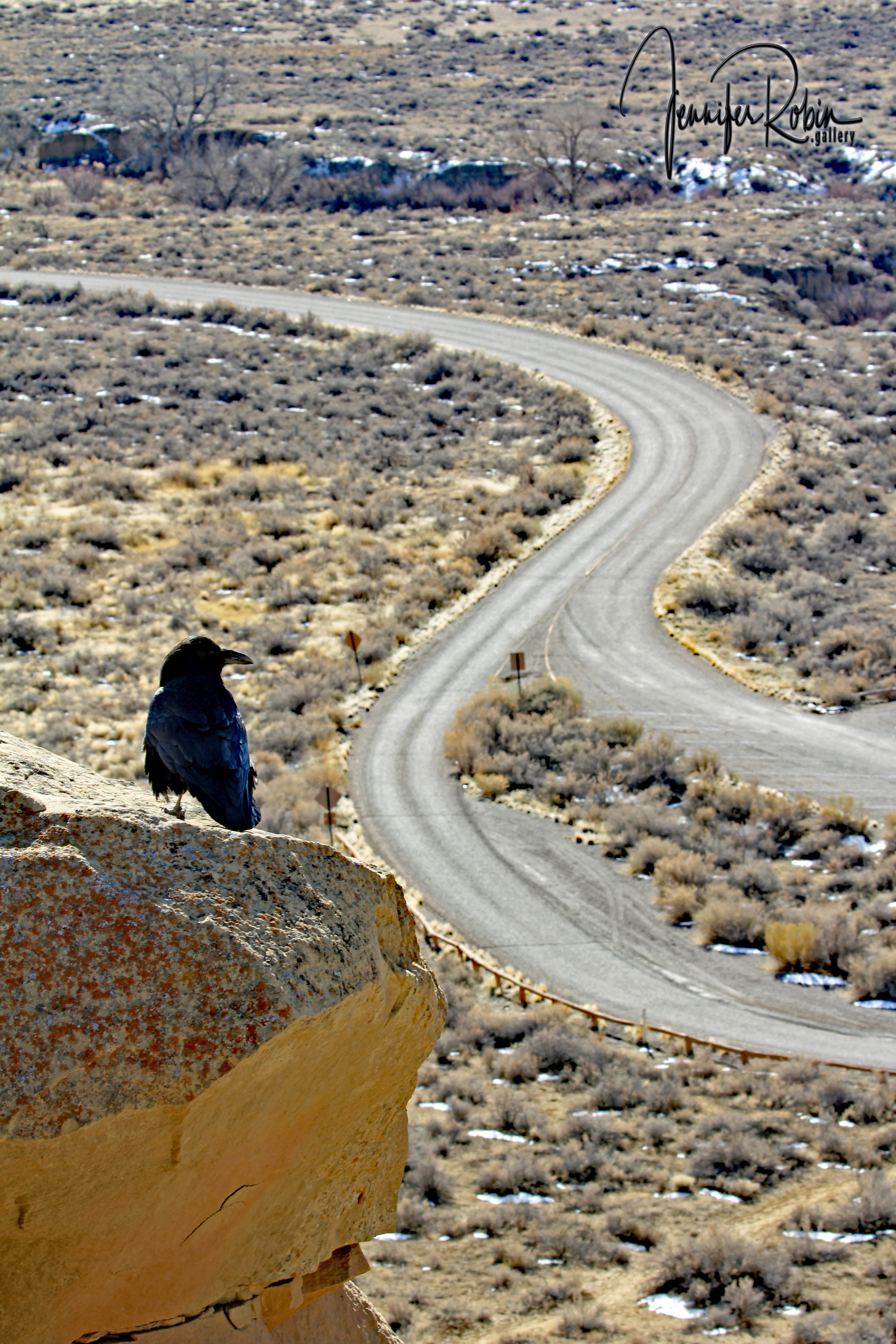 A raven overlooks the ruins and roadways for something to scavenge at Chaco Canyon in Nageezi, NM
