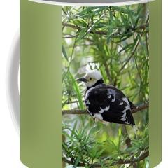 black-collared-beauty-jennifer-robin-coffee