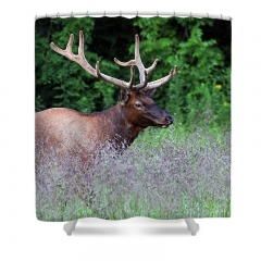 elk-in-purple-grass-jennifer-robin