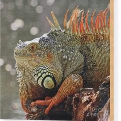 red-dragon-jennifer-robin-6
