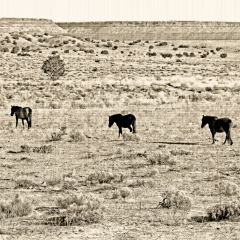 A vintage desert landscape of horses in pasture near Sante Fe River on hwy south 22.